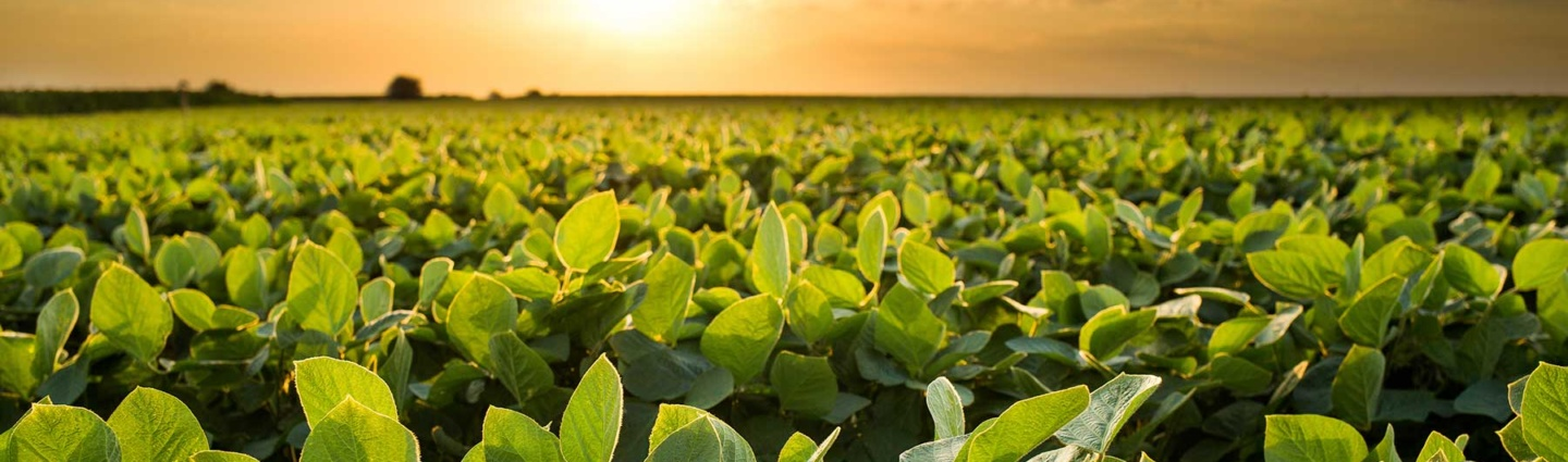 New Tool In The Toolbox To Manage Disease In Soybeans | FMC